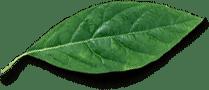 Leaf Free Img